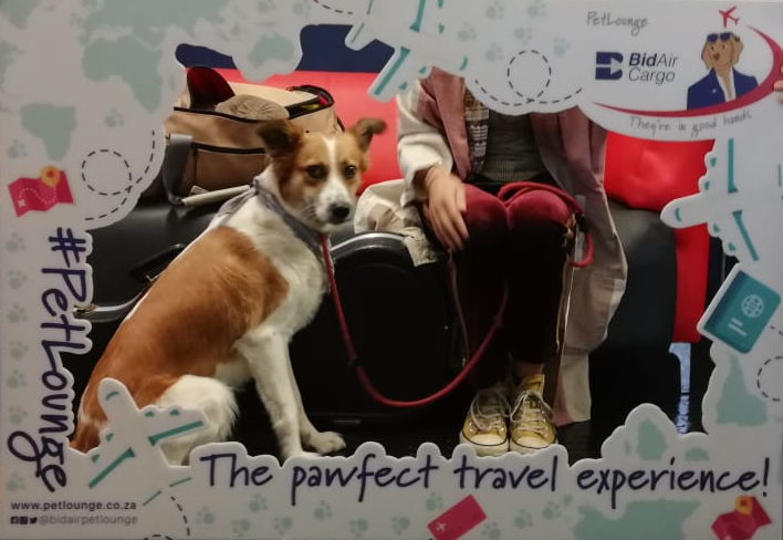 Meet Sunny. 🌞 She is flying to Durban this morning with her mom on a https://t.co/G7ZZh5NZwo flight. #PetLounge #AnimalTravel #instapaws #petlovers #loveforpets #animaltransportation #animals #petsofinstagram #pets https://t.co/jetBnciYCV