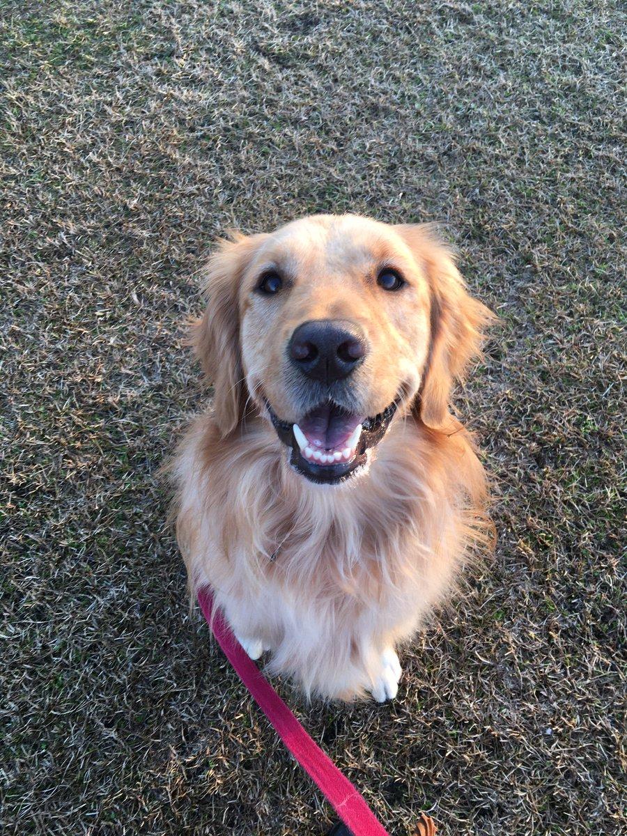 今公園にて子供にキックボードで追いかけられた上に頭を叩かれ「豚みたい!」と言われても怒らなかった犬と、完全に怯えて固まった犬(30kg)を抱えて車まで歩いた私を褒めていただいていいですか……泣きそう…序盤こんなに笑顔の楽しい散歩だったのに…