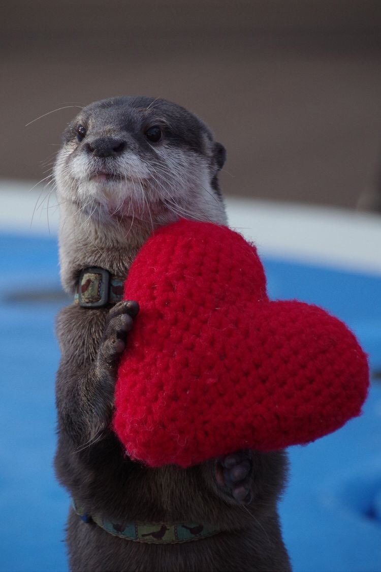 You don't need to be in a relationship to spread some love today. Happy Valentine's Day twitter friends 💖