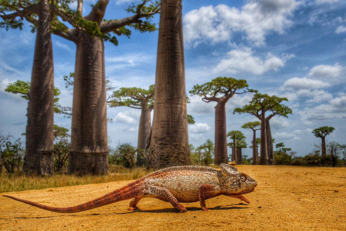 Rejoignez l'aventure du Projet Tana - Aidez-les à éditer un livre de photographies pour sensibiliser les enfants suisses et malgaches à la conservation de la biodiversité de Madagascar https://wemakeit.com/projects/projet-tana… via @wemakeit pic.twitter.com/G4PUOj48b9