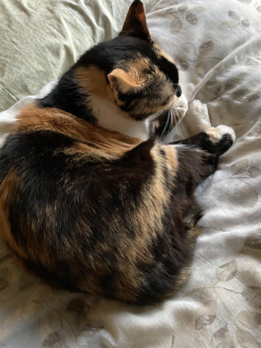 RT @pa_b8u: こんばんは🌃 🍫🍫🍫🍫🍫🍫🍫🍫🍫🍫🍫🍫🍫🍫🍫🍫🍫🍫🍫🍫🍫🍫 くれない🤤 #猫好きさんと繋がりたい  #バレンタイン10連ガチャ  #ピンクバレンタイン https://t.co/YWwQF55Xl2