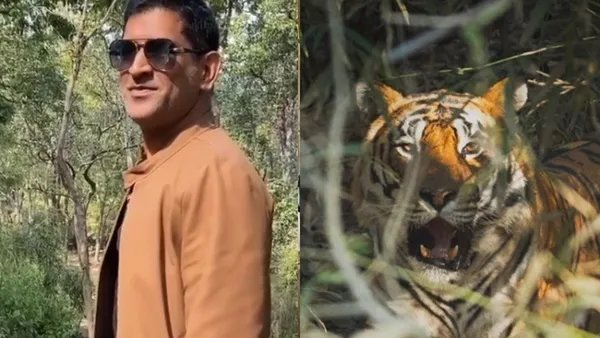 What happens when you spot tiger on your own? MS Dhoni flaunts photography prowess on Instagram#MSDhoni #Dhoni Read: https://www.timesnownews.com/sports/cricket/article/what-happens-when-you-spot-tiger-on-your-own-ms-dhoni-flaunts-photography-prowess-on-instagram/553613…