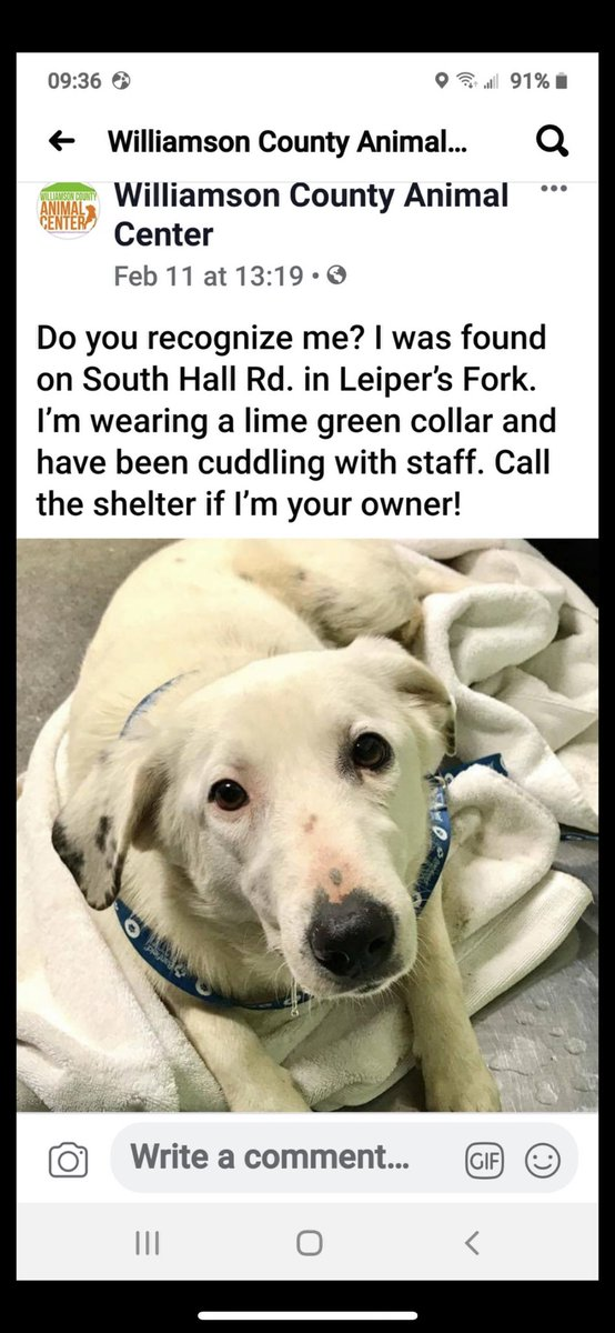 Anyone in the Leiper's Fork area missing this sweet pup?
