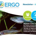 Image for the Tweet beginning: 📢 ERGO's first #newsletter 📰is