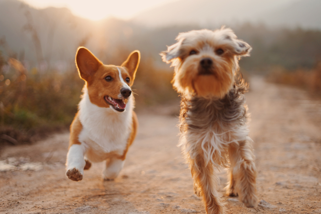 It's FRIDAY!!! https://soo.nr/TZyu  #FurBallin #LoveFurBallin #FurBalls #FridayVibes #Fridays #FridayMood #HappyFriday #doglove #dogsandpals #doggy #doggo #puppy #friyay #fridayfeeling #weekendvibes #beachdog #happydog #outdoordog #hiking #corgi  #corgilove #corgispic.twitter.com/zEOUS9wLge