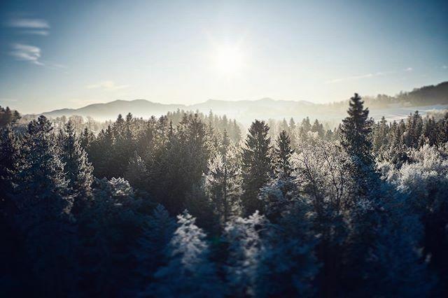 Happy Weekend everyone!  . . . . . #visitbavaria #forestlovers #alps #bavaria #pathsaremadebywalking https://ift.tt/2ORTVWwpic.twitter.com/SydZhFBH4b