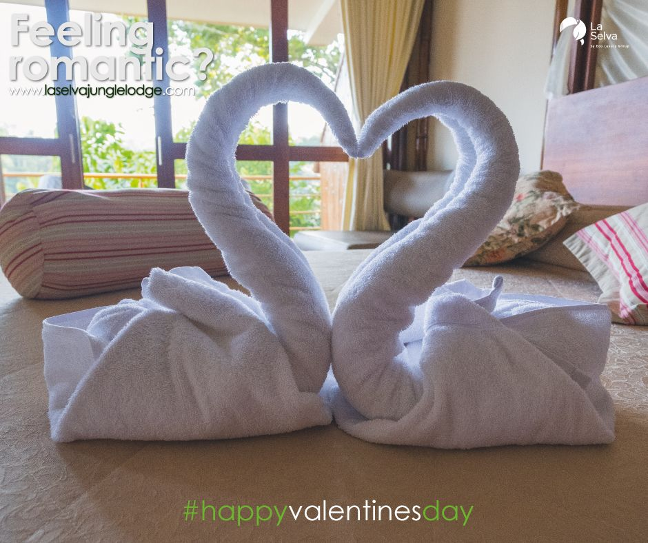 Sometimes the best way to runaway is to make sure you go as far as possible.  Escape with your loved one to the Amazon Rainforest with La Selva! #selvalode #valentinesday #laselvajunglelodge #amazonrainforest #luxurysuite #romanticgetaway<br>http://pic.twitter.com/fW22FGBWKx