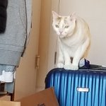 Image for the Tweet beginning: New #housesit, new cat checking
