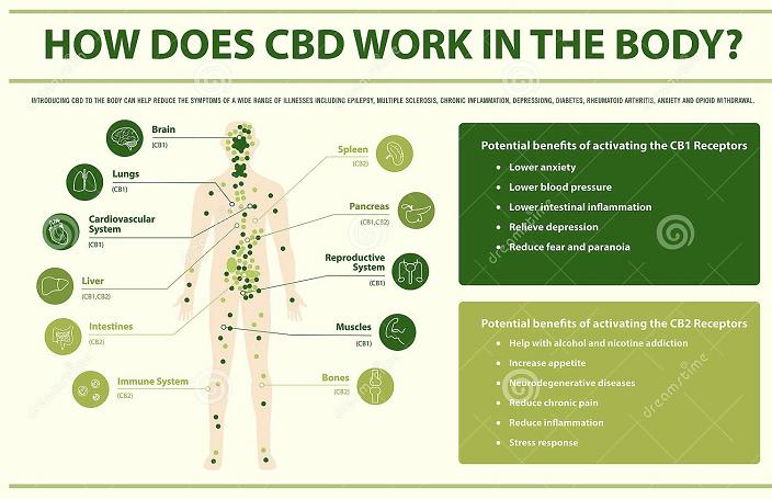 Check out this infographic that shows how CBD helps the body. #Hemp #HempLife #HempProducts #HempHelps #CBDHeals #CBDHealth #CBDBenefits #CBDProductspic.twitter.com/1qaa265KWA