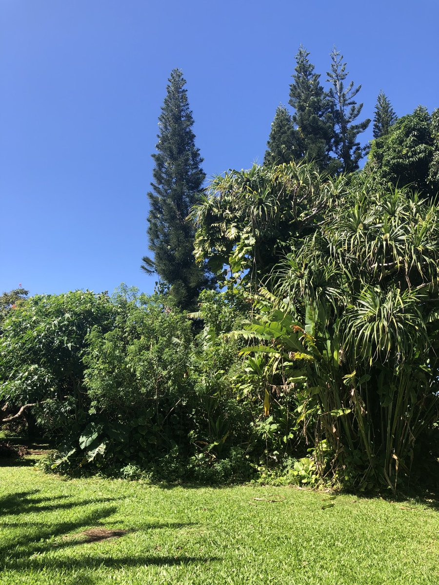 test Twitter Media - Haiku has blue skies and a nice breeze. #CMWeather #Maui #MauiNokaoi #ConsciousMaui #MagicalMaui #Haiku #BeautifulDay https://t.co/aBEoH7efnb