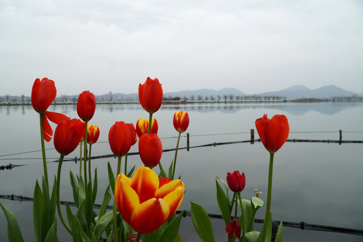 Spring has sprung! Flowers are spotted around West Lake, the most famous attraction of Hangzhou, China
