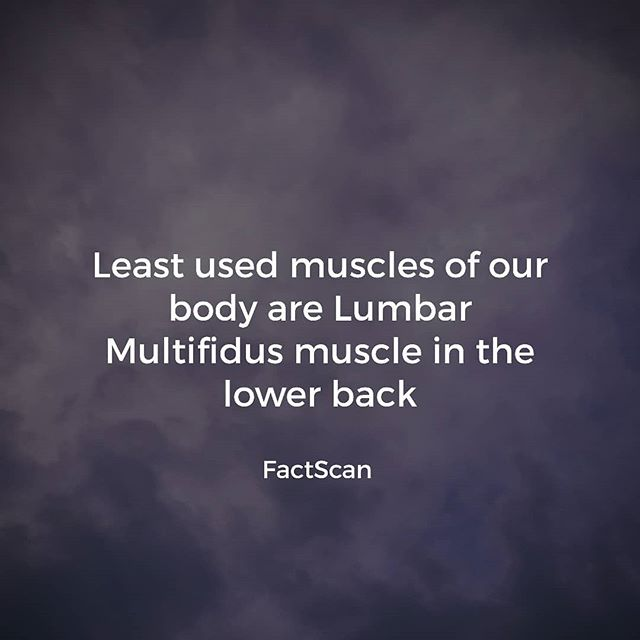 Least used muscle in our body is the Lumbar Multifidus muscle in the lower back  #muscle #bodybuilding #body #lumbar #lumber #healthylifestyle #healthyfood #building #anatomy #human #humanbody #factsoflife #funfacts #factscanpic.twitter.com/0GQR9JS3ux