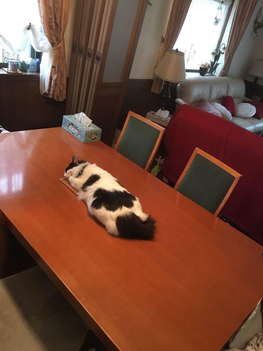 実家帰ったらダイニングテーブルのものすごい中央でものすごい寝てるんだが