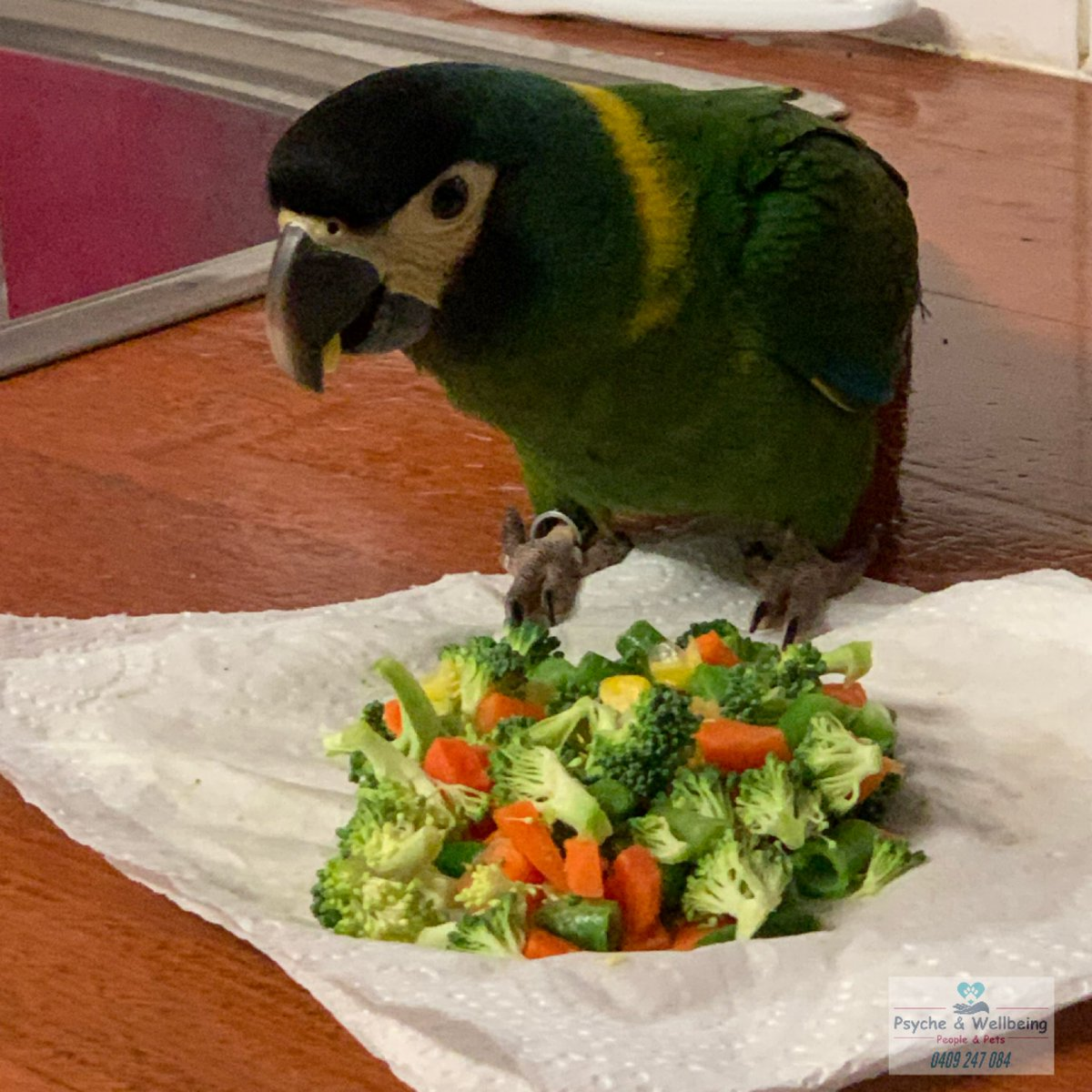 Devon's veggies didn't make it into the bowl...#devontheyellowcollaredmacaw #engagednotcaged #psycheandwellbeing #patsyannewestpic.twitter.com/pcwljVOOJ1