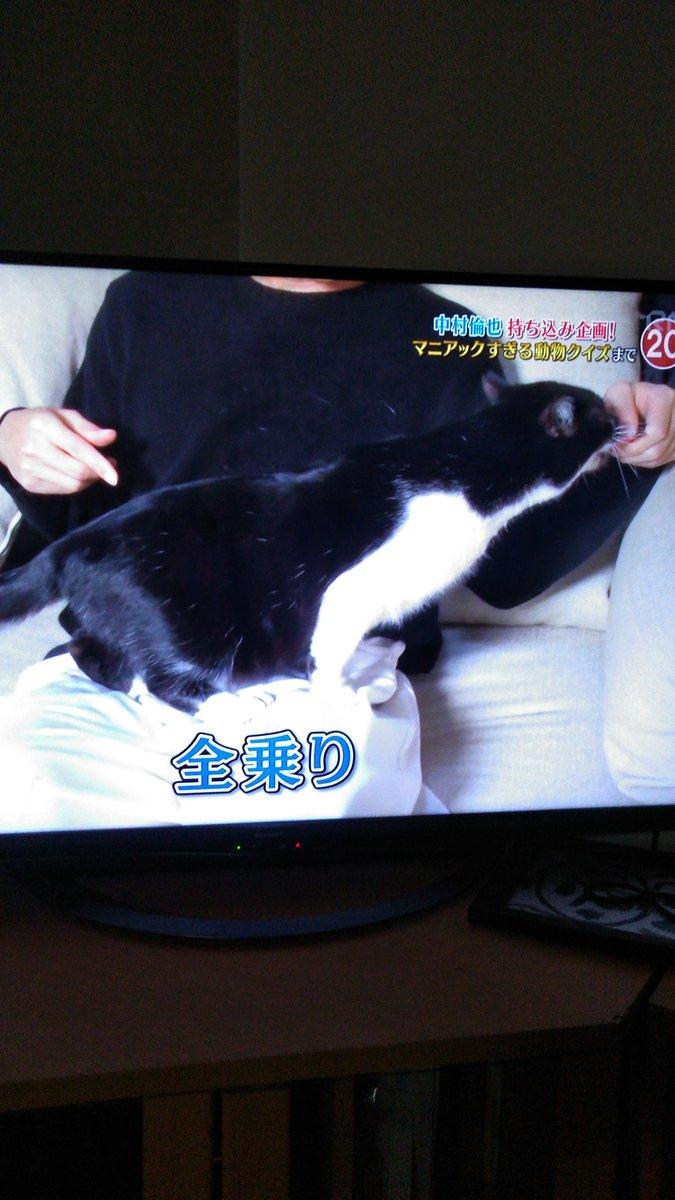 池崎 スマイル サンシャイン 猫