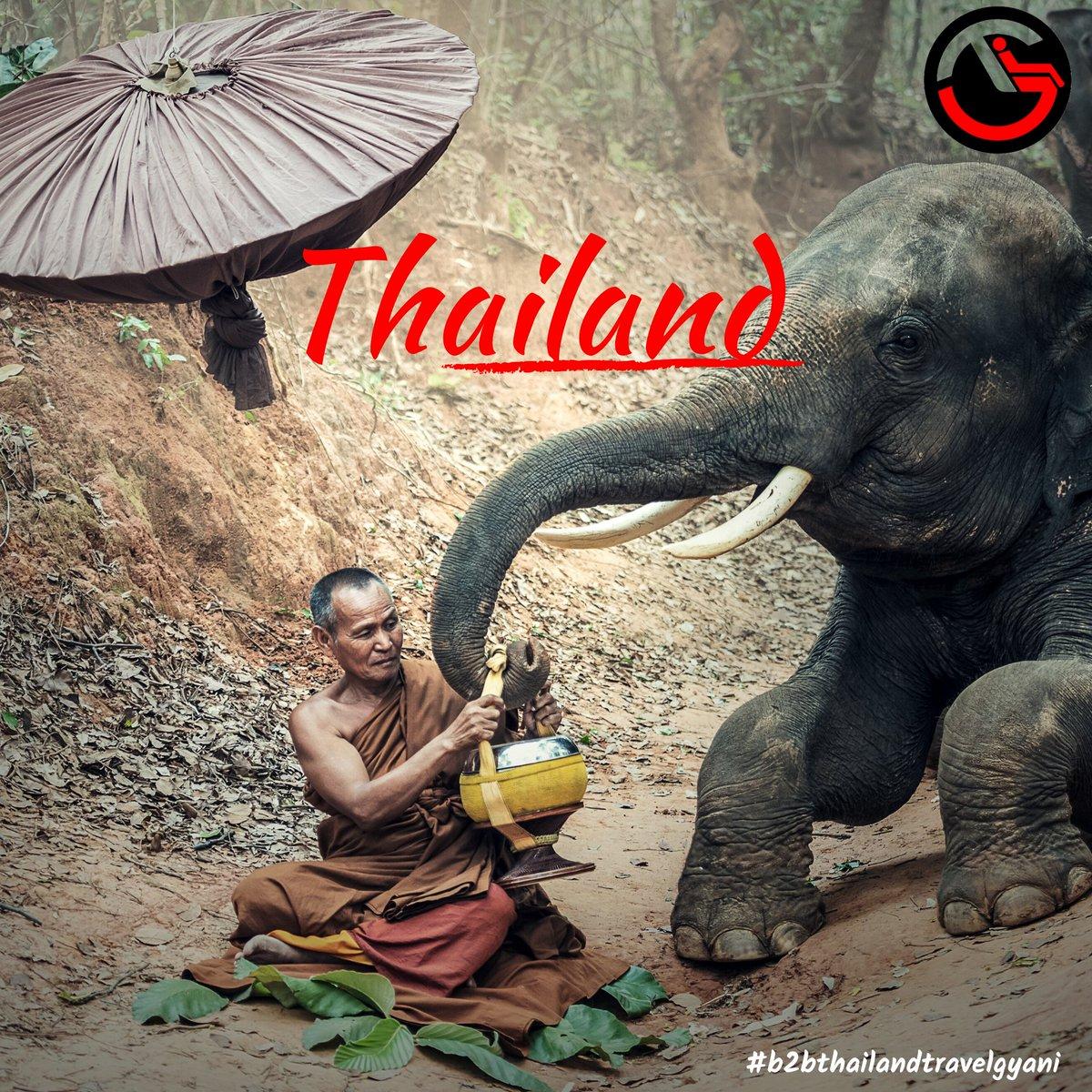 TheThai elephant(Thai: ช้างไทย, changThai) is the official national animal ofThailand. n estimated 100,000 domesticated or captiveelephantsinThailand. #thailandtourismboard #thailandbeach #thailandtourism #thaielephant #thaielephanthome #thaielephants #elephants  #tgpic.twitter.com/JgyUJyhipn