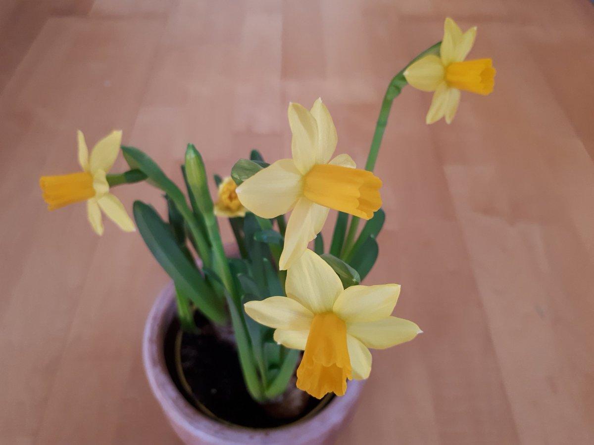 #Frühling