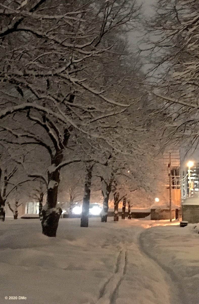 February Evening, Garden of the Provinces, Ottawa. #MyOttawa @arborsmarty #winter #nature #travel #Photography