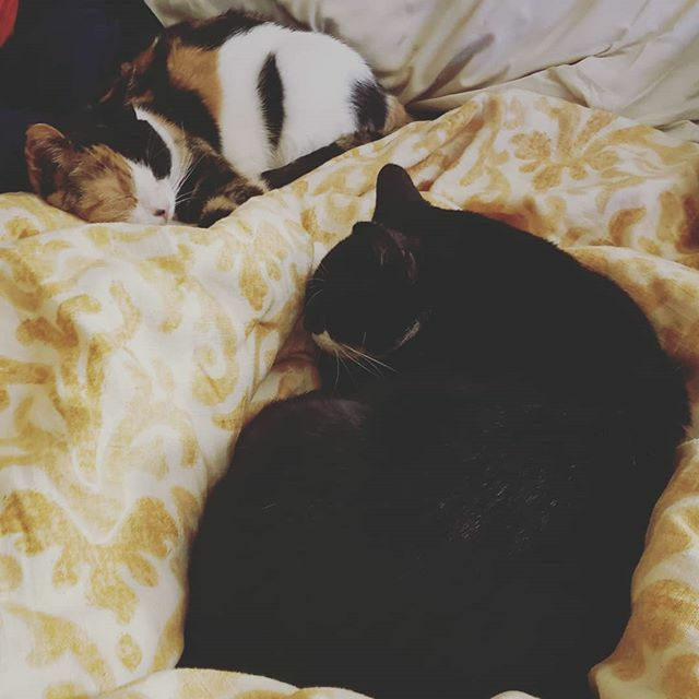 They are not big cuddlers but they love each other. #cat #cats #kitty #kitties #tuxcat #tuxedokitty #tuxedocat #tuxkitty #calico #tuxedo #calicocat #calicokitty https://ift.tt/2T6dVHC