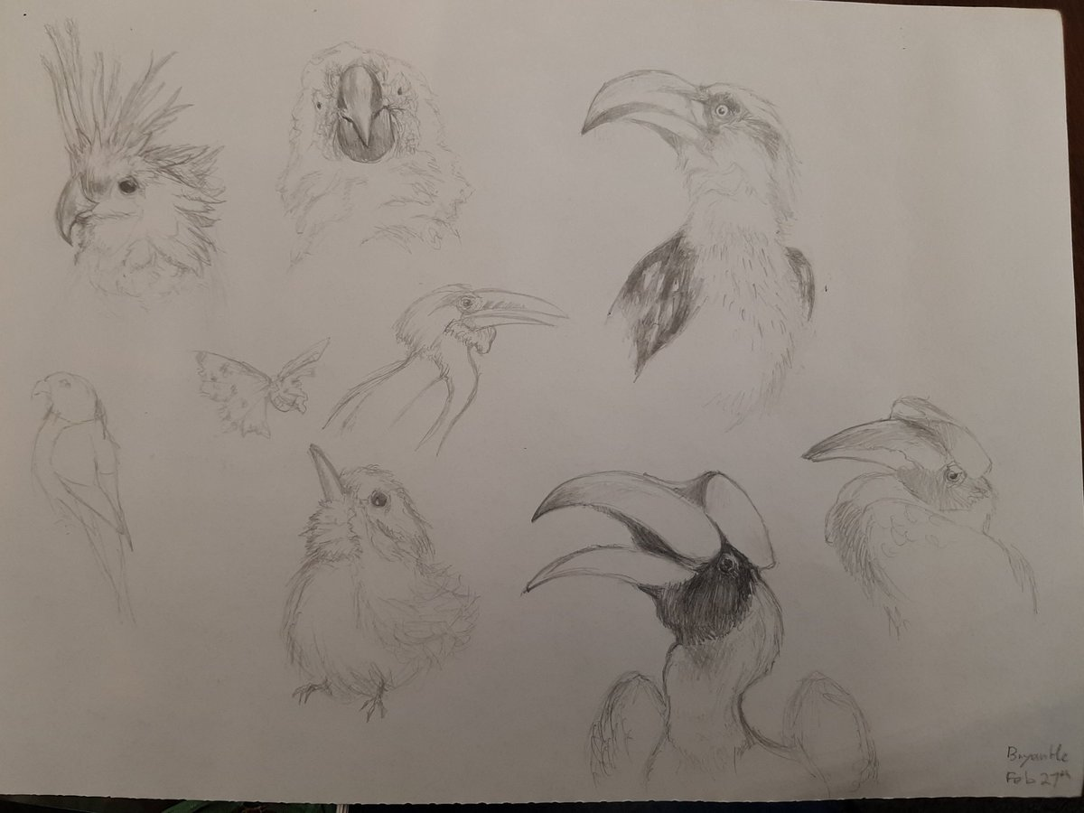 Some birb doodles I did in class :) #Artist #art #drawing #Sketching #birds #traditionalart