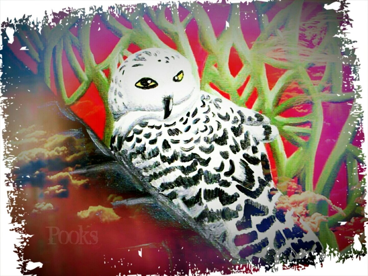 """""""Snow Owl"""" by Pooks   Artist Pooks82Official on Twitter See more: at  #Art"""
