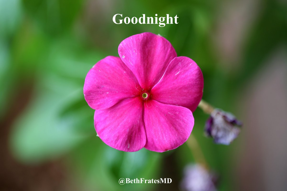 Wishing you a lovely evening. Goodnight. 💤🛌🙏😊🌺 #goodnight #sleep #Health #Happiness #sweetdreams