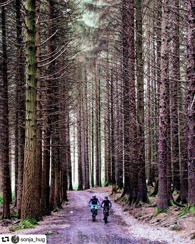 #repost @sonja_hug ・・・ Among the giant trees. #landscape #photo #best_of_ireland #nature #discover #theimaged #irish #irelandgram #ireland #tollymoreforestpark #northernireland #countdown #exklusive_shot #primeshots #snapshot #explore #seemycity #vie…