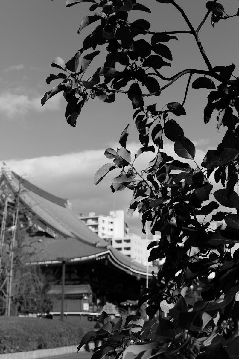 Leica M-E. Summicron M50mm F2 4th #photography #picture #photograph #photo #leica #LeicaCamera #Leicagram #TheLeicaLook #LeicaWorld #LeicaSociety #Leicaphoto  #leicame #summicron #photo_jpn #monochrome #bw #blackandwithe #bwphotography #monochromephotography #asakusa #浅草