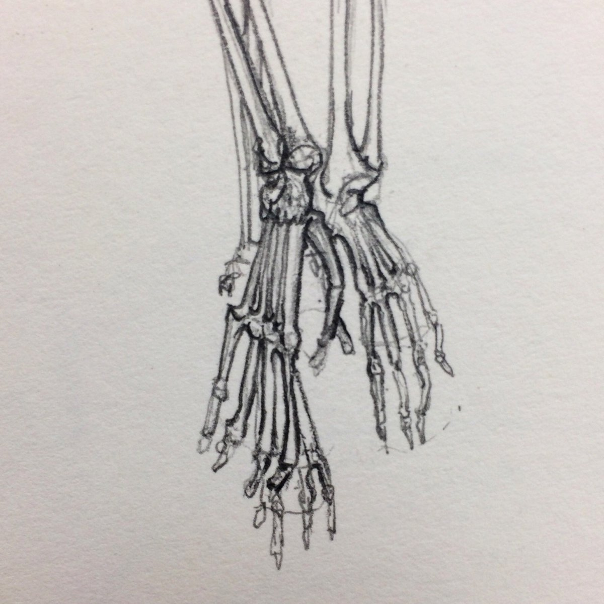 #sketchbook #illustration #pencil #handdrawn #skeleton #specimen #gibbon #hand #feet #zoology #pathology #primatology #morphology #cambridge #museum #work #myart #anatomy #notamonkey #brachiation #naturalhistory #anatomicaldrawing #macabre #criticallyendangered #voiseydrawing