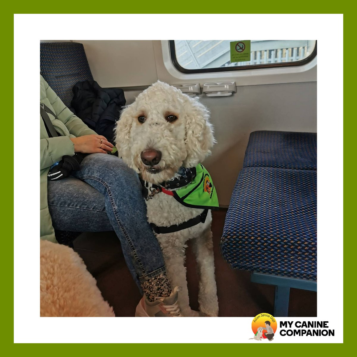 Happy Friday from Hugo   #autismservicedog #servicedog #autism #asd #workingdog #greenjacketdog #mcc #mycaninecompanion<br>http://pic.twitter.com/bOKahAuTVs