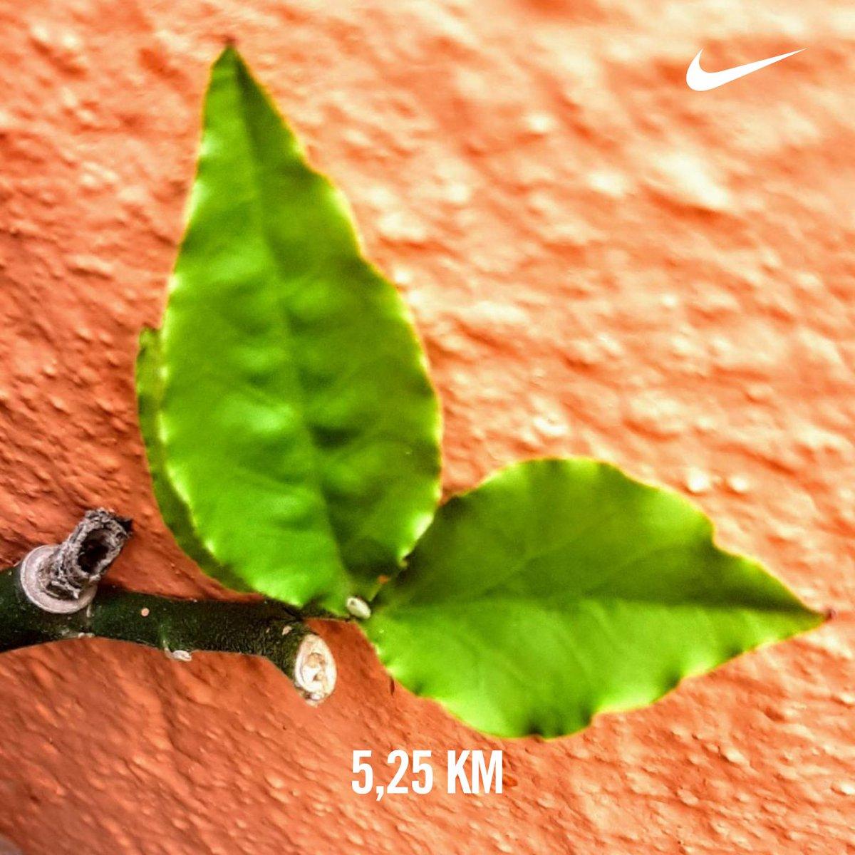 #5k no #parquedajaqueira #nrc #sextafeira ##NikeEpicReactFlyknit #nikerunclub #nikeplus #nikerunning # #pic.twitter.com/xbGgGUVUWa – at Pista de Cooper do Parque da Jaqueira