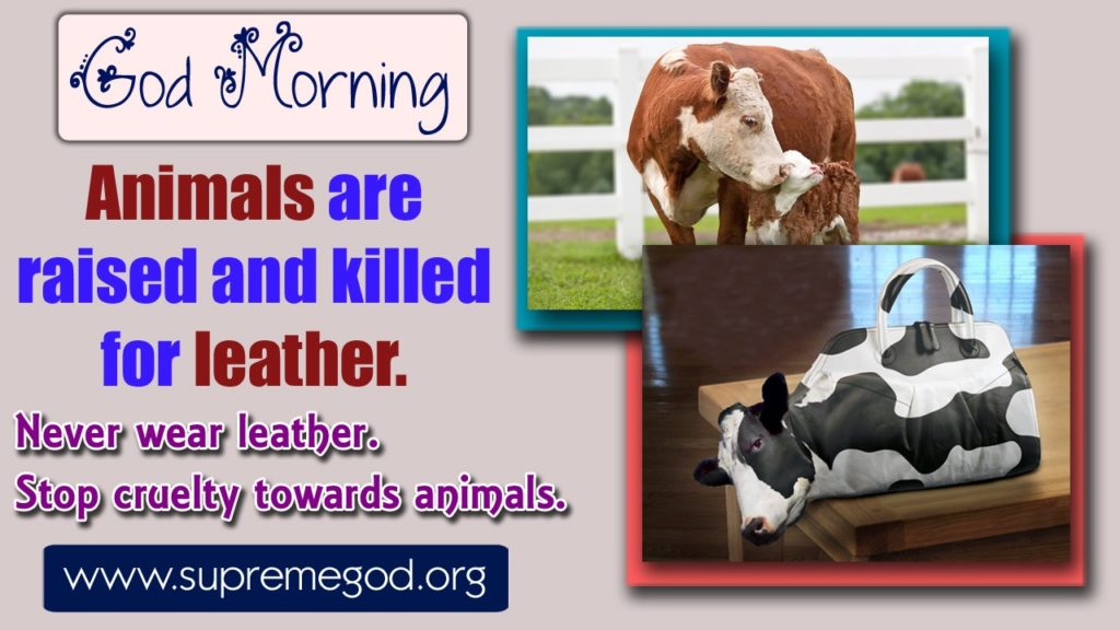 #GodMorningFriday  animals are raised and killed  for leather. Never wear leather stops cruelty towards animals.must watch on sadhna Tv at 7:30 pm.@realDonaldTrump @aajtak @ArvindKejriwal @ndtv @SatlokChannel @AamAadmiParty @ZeeNews