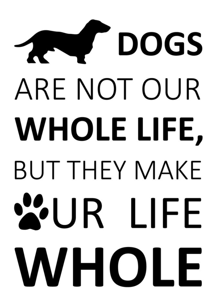 Do you agree? #dogs #dogsofinstagram #dog #dogstagram #puppy #instadog #pets #dogoftheday #doglover #love #puppies #doglovers #of #instagram #pet #cute #puppylove #dogsofinsta #doggo #cats #puppiesofinstagram #ilovemydog #doglife #animals #petstagram #petsofinstagram #Adopt