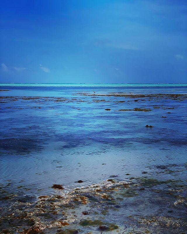 Non lontano dalla barriera corallina. #Zanzibar #Tanzania #africa #ocean #blue #travel #vacation #nungwi #nungwibeatch #barrieracorallina #zanzibarnorth #adobe #adobelightroom