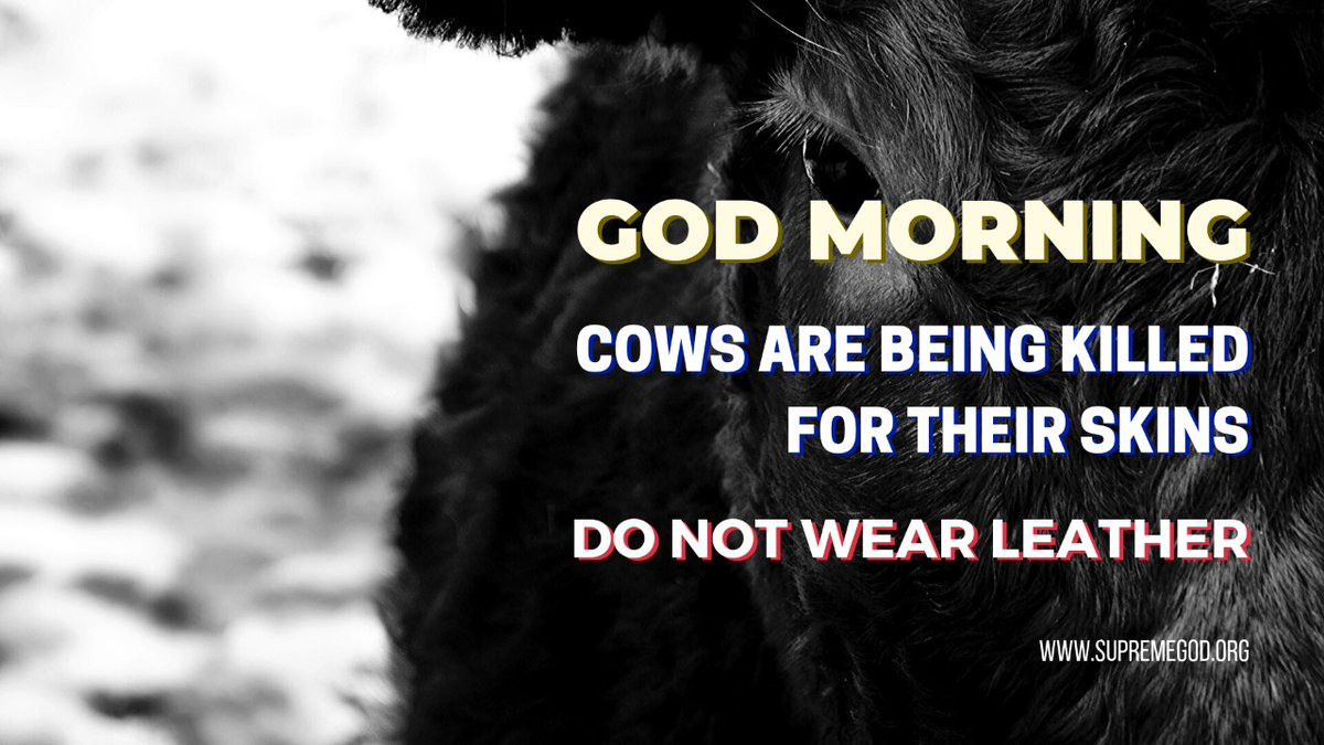 #GodMorningFriday God Morning Friends Animals are brutally slaughtered for shoes, gloves, belts and other accessories. Stop Wearing Lather. To Know More Watch Sadhna T.V  -7:30pm <br>http://pic.twitter.com/SlPEsGrneE