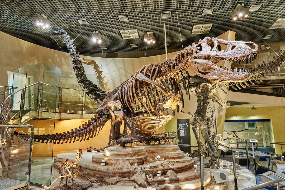 【 #TLを国立科学博物館にしよう 】#かはくファン の皆さま、素敵なハッシュタグをありがとうございます😭💓明日2/29(土)より臨時休館となりますが、休館中も #国立科学博物館 をお楽しみいただけますよう、公式Twitterもどんどんツイートしていきたいと思います‼️#誰もいない展示室 #かはく