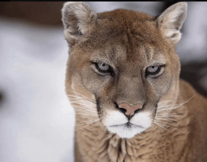 rencontre cougar bourg en bresse