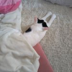 幸せそうな猫ちゃん・コタツの中は天国!パターンがいっぱい!