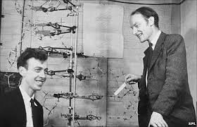 Today in 1953  James Watson and Francis Crick announce to friends that they have determined the chemical structure of DNA; the formal announcement takes place on April 25 following publication in April's Nature (pub. April 2)