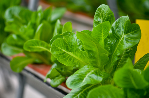 Traditional #agriculture is unsustainable and hurts the #environment, which is why #vertical #farming is embraced as a viable alternative. Read more: http://ow.ly/uLeS50yypRY