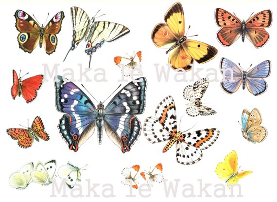 Gorgeous butterflies for crafting  scrapbooking #jewelrymaking crafting