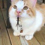 仲良しなのか謎が深すぎる..トカゲと猫が交わった結果が可愛すぎる
