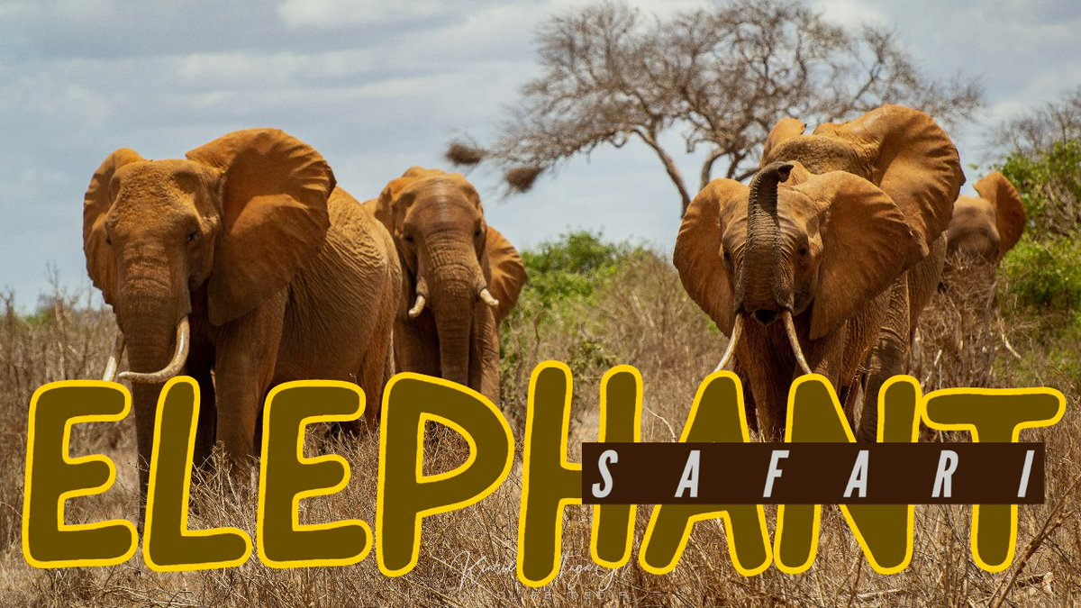 Love Elephants? here is chance for you to join an exclusive Elephant Safari in Kenya to Learn, Explore and help conserve these gentle giants: 📽️ 🌍  #Wildlife #travel #travelphotography #photography #nature #photooftheday #wanderlust