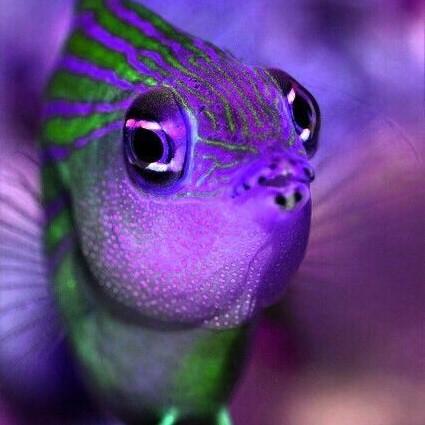 Ohhhhh..... I sea the weekend coming! 🧜♂️😘😍😆🌊 #Friday #mermaid #relax #letshavefun #February #mermaidlife #thelittlemermaid #mermaids #mermaiddreams #believe #mermaidtail #love #happy #picoftheday #photooftheday #coral #coralreef #fish #friendsoftheocean #ocean