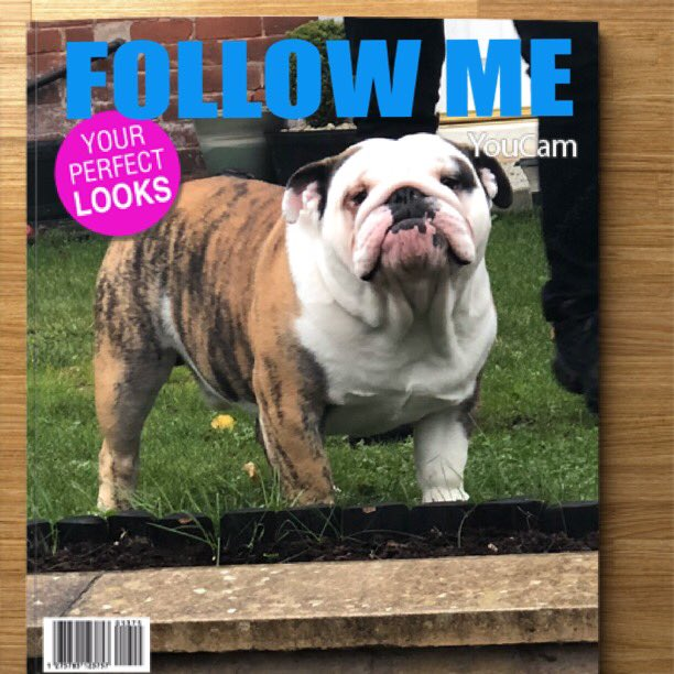 Still looking for my friends twitter universe please retweet and repeat💖😘🕺😍show you love  #ZSHQ #puppy #bulldogpuppy #Zombiebullz #WeTheNorth #pedegree #dog #puppies #HereWeGo #puppylove🐶 #NYYankees #Ruffriderz #puppybulldog #puppy4life #TJ5 #like #follow #new