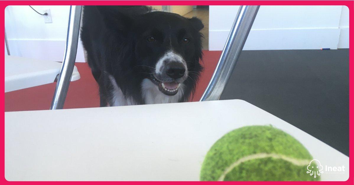Name a more iconic duo, I'll wait.  Twitter, dites bonjour à Lucky, chef de la Division Bonheur. Son mandat lorsqu'il est au bureau : jouer. Nous encourageons nos employés à amener leurs animaux de compagnie au travail. #zootherapie #chien #happy #bienetre pic.twitter.com/WOfwNwGMLC