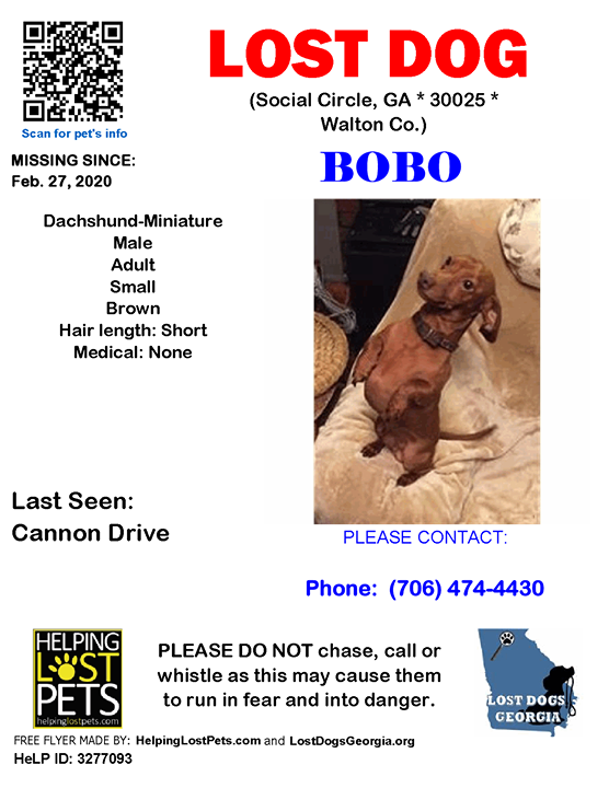**FACEBOOK LINK:  ** #LOSTDOG #Bobo #Social Circle (Cannon Drive)  #GA 30025 #Walton Co. , #Lost #Dog 02-27-2020!, Male #Dachshund-Miniature  Brown/He will run out the door & he will wind up near the highway. He usually gets picked up by someone & they wi…