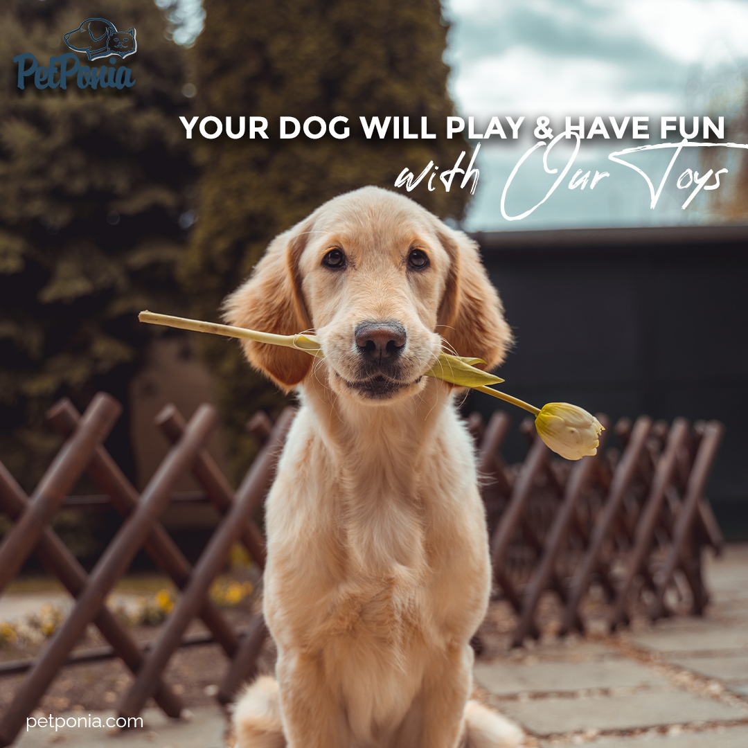 They will never be bored again! #quote #quoteoftheday #qotd #amazing #great #wonderful #dog #dogs #doglove #lovedogs #pets #cats #catlove #lovecats #puppy #dogsofinstagram #gooddog #doglover #home #family #dogproducts #catproducts #dogoftheday #cat #kitten #homepets  #PetPonia
