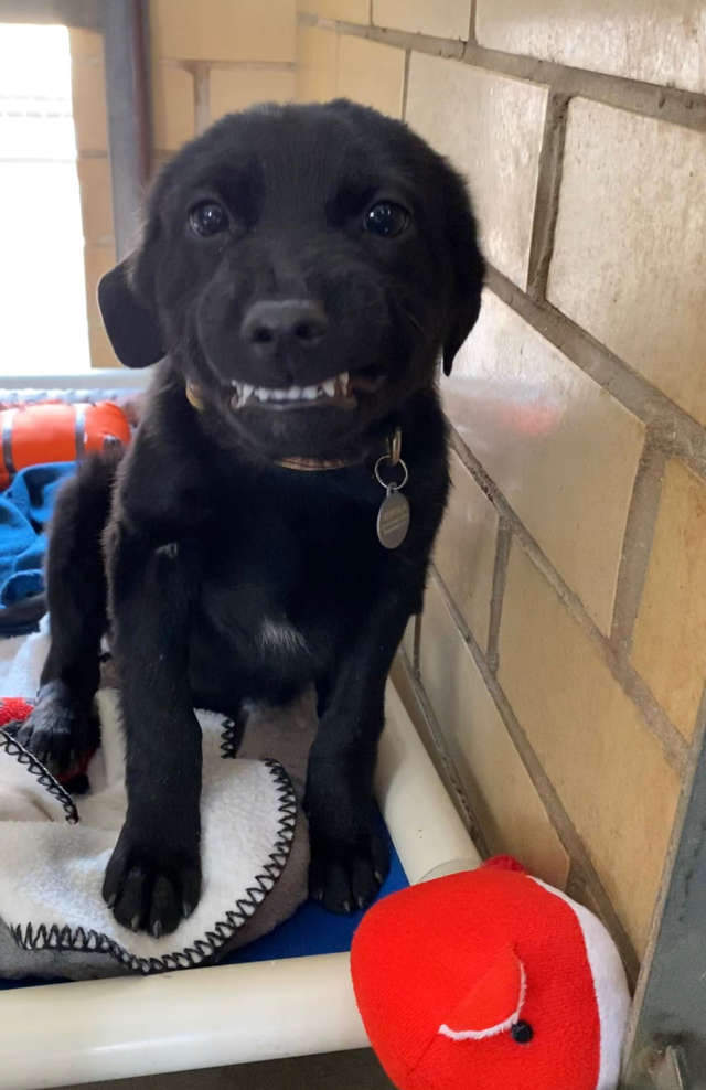 This #dog #smiles at everyone that passes. You would think someone would adopt him.