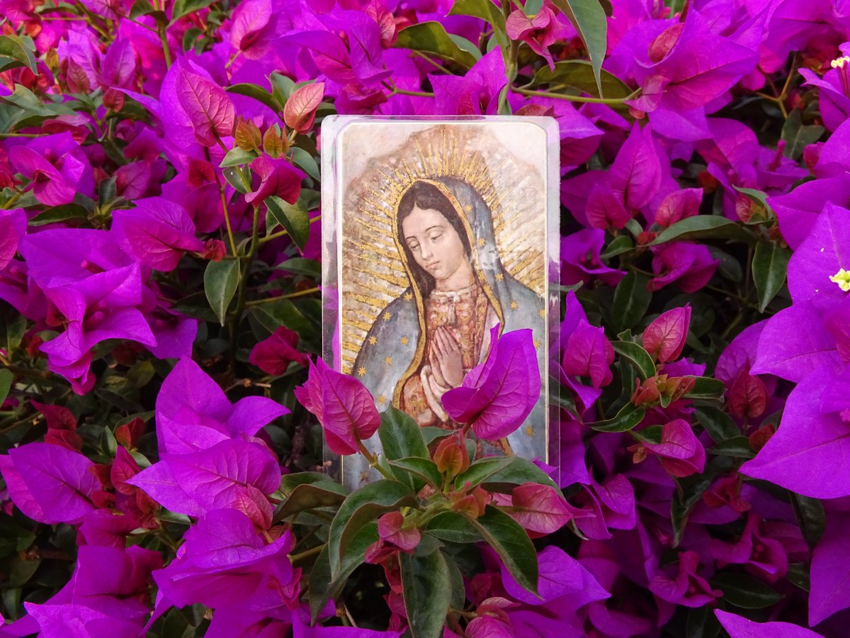 #Puntaditas Te invitamos a unirte en oración, a tejer el manto de la Virgen María desde la ciudad de #Bucaramanga. Deja tus peticiones en la caja de comentarios de la transmisión #FacebookLive en este enlace https://www.facebook.com/rmariacolombia/videos/916056912130889/… pic.twitter.com/9i0tGsbHT4